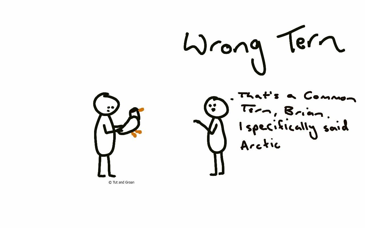Tut and Groan Wrong Tern cartoon